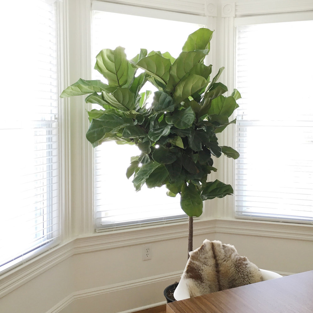 Asbury Park Residence Plant Styling
