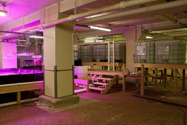 Growbeds and fish tanks in The Plant. Photo credit: Plant Chicago