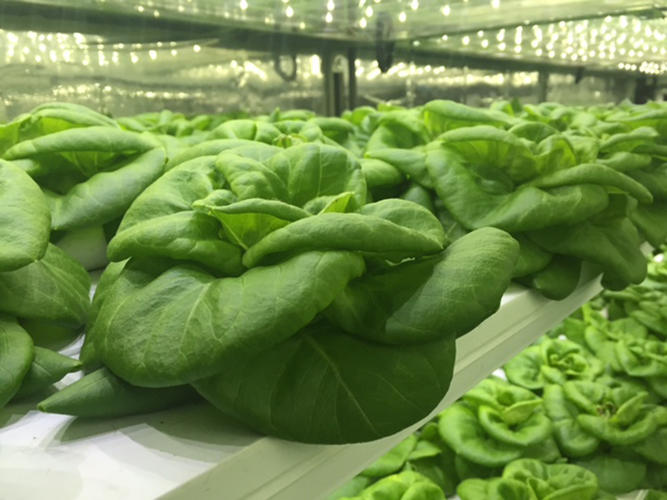 3063275-slide-5-take-a-3d-tour-of-a-vertical-farm-packed-inside-a-shipping.jpg