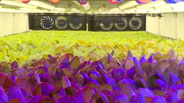 vertical-farms-1.jpg