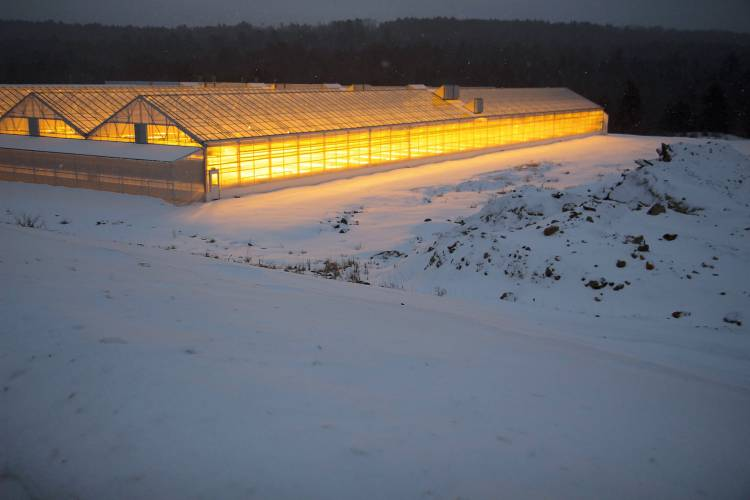 Light glows inside the Lef Farms greenhouses in Loudon last week. Elodie Reed photos / Monitor staff