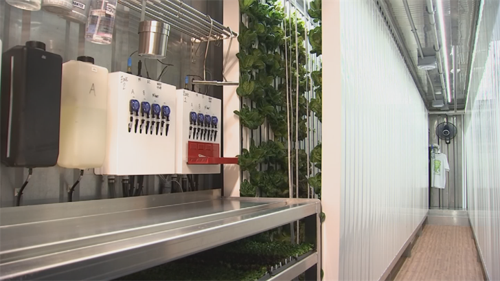 Heather and Brian Szymura are growing vegetables inside a shipping container
