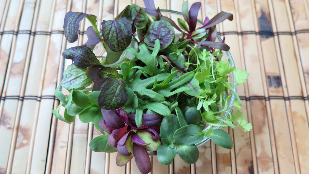City Bitty Farm grows an abundance of microgreens.