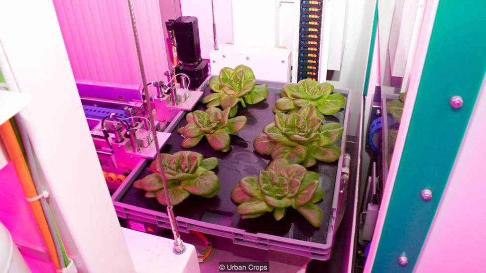 Vertical farm companies hope to one day sell consumers indoor kits of their own for the ultimate 'farm to table' experience (Credit: Urban Crops)