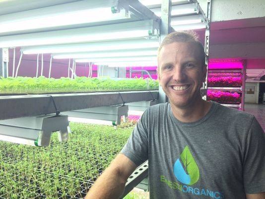 Brian Ernst, owner of Ernessi Organics in Ripon, grows microgreens and veggies in his basement urban farm.(Photo: Nate Beck/USA TODAY NETWORK-Wisconsin)Buy Photo