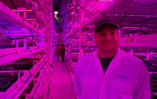 Infinite Harvest founder Tommy Romano grows lettuce and other greens in his Lakewood vertical farm.  (Kate Tracy)
