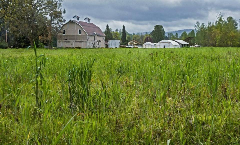 The historic Reise Farm, at the intersection of Military Road and the Orting Highway. It will be kept as a farm because of the transfer of development rights to the new Stadium Apartments.Peter Haley phaley@thenewstribune.com