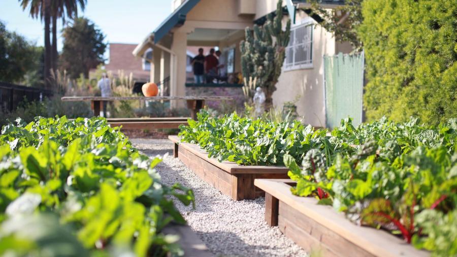 Raised garden beds at Alma Backyard Farms. (Rebecca Yee)
