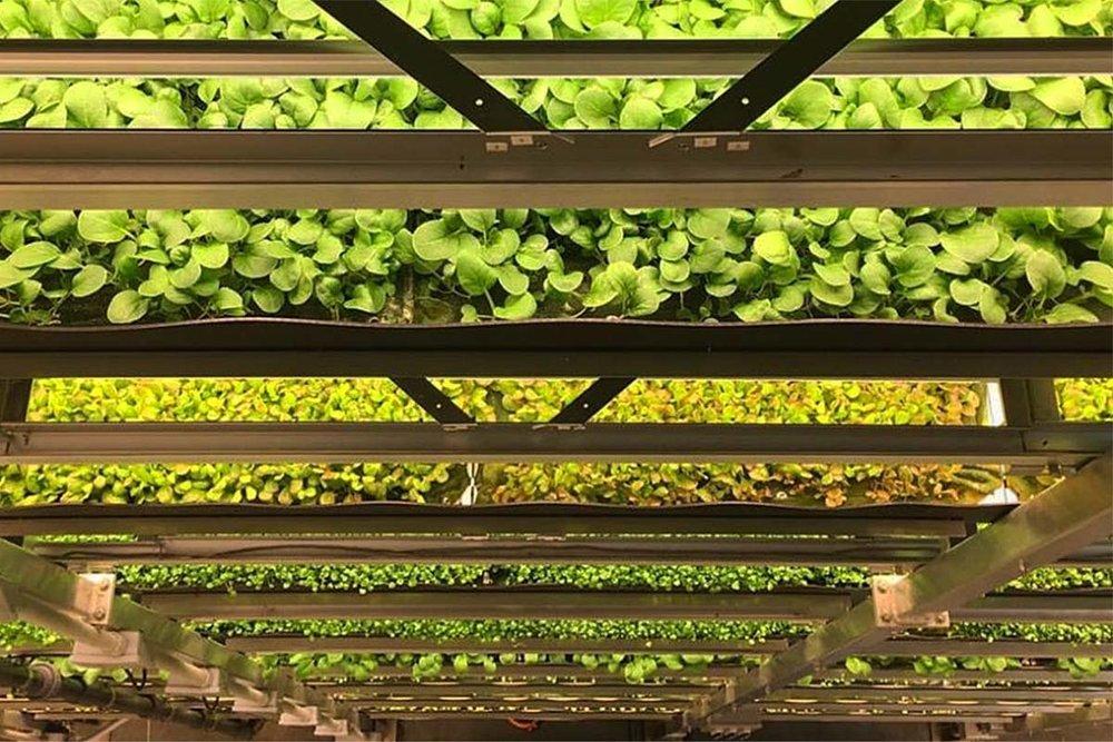 VIA AEROFARMS.COM                                        AeroFarms Vertical farm