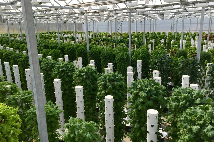 BetterLife Growers will use 'tower gardens' like these to grow lettuce and herbs in Atlanta. Photo: Scissortail Farms