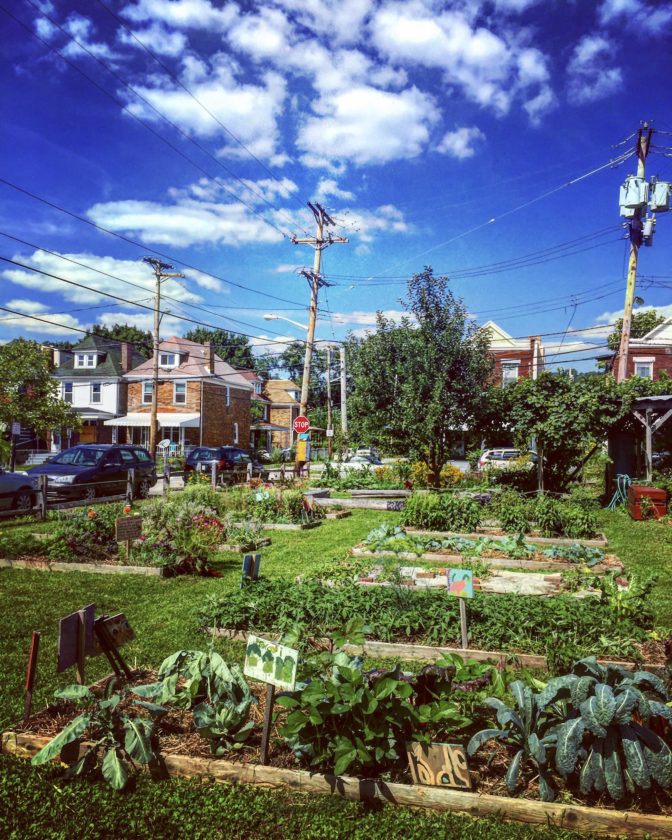 Courtesy photo This photo from Grow Pittsburgh shows an urban agriculture area in the city.
