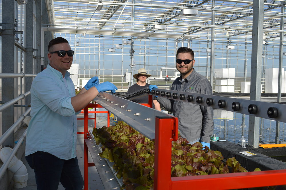 Superior Fresh COO Brandon Gottsacker and production manager Brunno Cerozi in the greenhouse where they're processing leaf lettuce, which gets its water and nutrients from the fish house next door. Photo courtesy of Superior Fresh