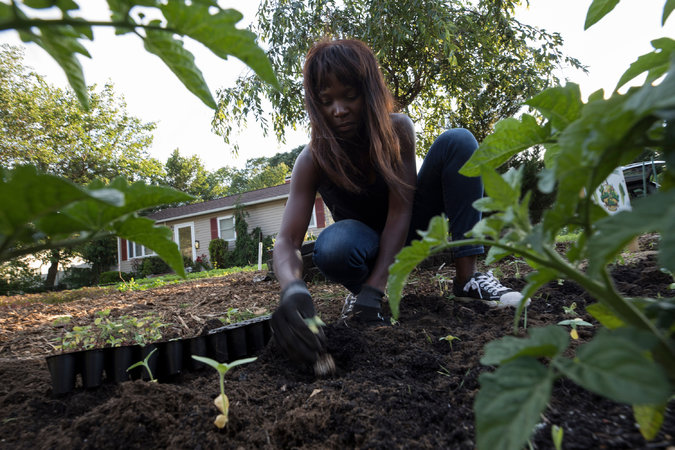 "Ms. Adams planting sunflowers in Ms. Trimarco's lawn. Ms. Adams grew up in Kasese, Uganda, a town, she said, where ""everything we ate, we grew."" CreditJames Estrin/The New York Times"