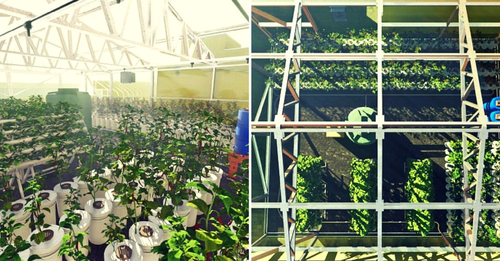 hydroponic-farm-old-age-homes-Srihari-Kanchala.jpg
