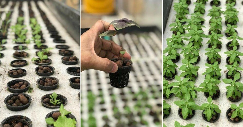 hydroponic-farm-urban-farmer.jpg