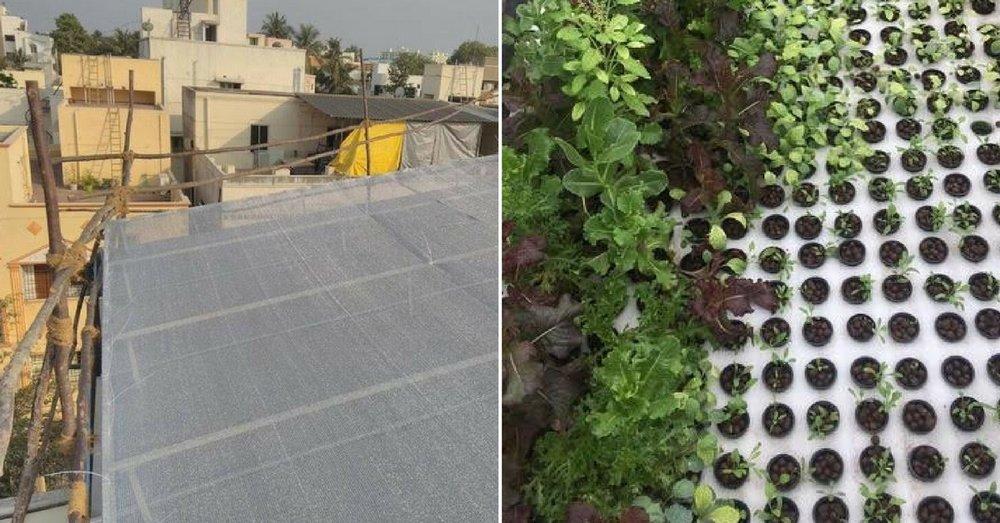 hydroponic-farm-urban-farmer-1.jpg