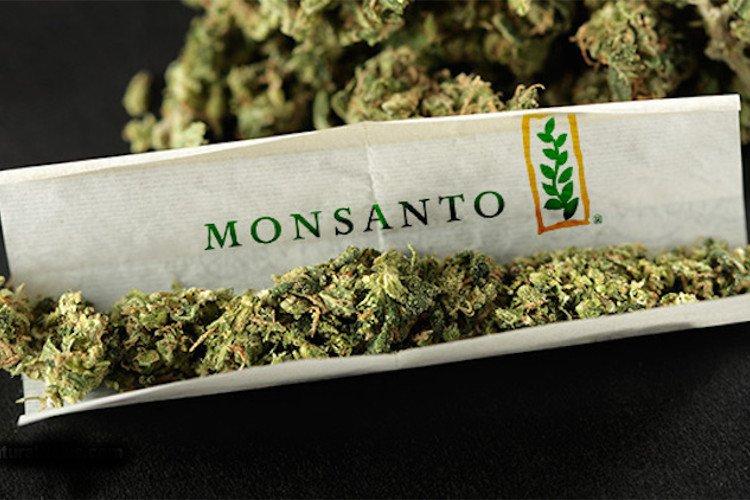 Monsanto-Cannabis.jpg