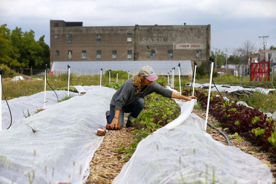 Mayda Pozantides takes a cover off of some vegetables at the Groundwork Market Garden on Genesee Street. This marks the first year the farm has yielded crops. (Mark Mulville/Buffalo News)