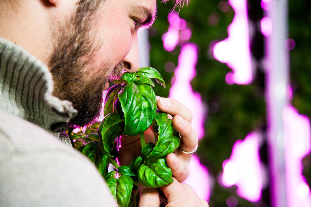 Hydroponics and aquaponics empower people to grow anywhere, all year long.