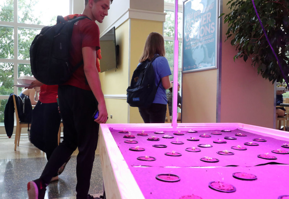 Hydroponic tables made by University of Virginia alum Alexander Olesen, founder of Babylon Micro-Farms, make fresh herbs available to students in the O-Hill Dining Hall at UVa.  Andrew Shurtleff/The Daily Progress