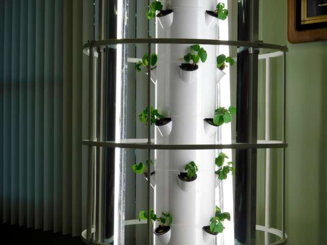 (THE PLANT TOWER CONTAINING STRAWBERRY PLANTS ON DISPLAY AT THE UNIT 40 BOARD MEETING THIS WEEK)