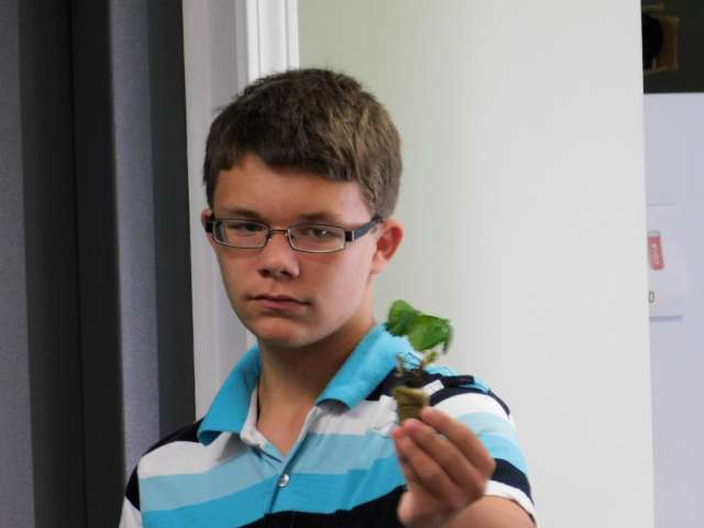 (AVERY LUEKEN DISPLAYS ONE OF THE STRAWBERRY PLANTS BEING GROWN)