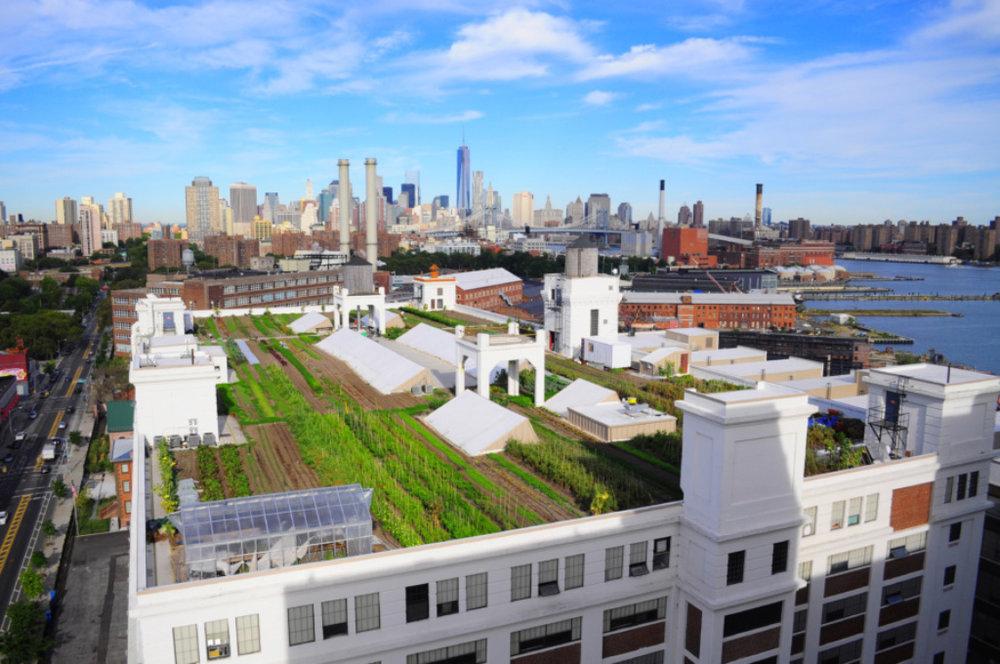 Archtober Building of the Day: Brooklyn Grange Farm (Anastasia Cole Plakias/brooklyngrangefarm.com/Image via AIA NY)