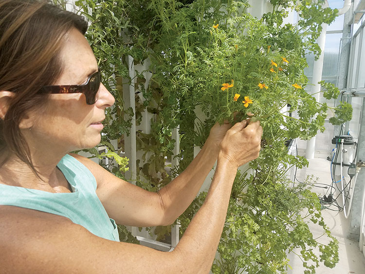 Theresa Reid, owner of Beyond Organic, plans to open a juice bar in the building in front of her 3,500 square-foot greenhouse at 89 Howell Road in Howell where she grows 15,000 plants in aeroponic towers. All photos by Gretchen Van Benthuysen