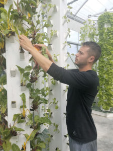 Matt Engleke, Theresa Reid's son, tends to some of the greens and herbs grown in vertical aeroponic towers at Beyond Organic.