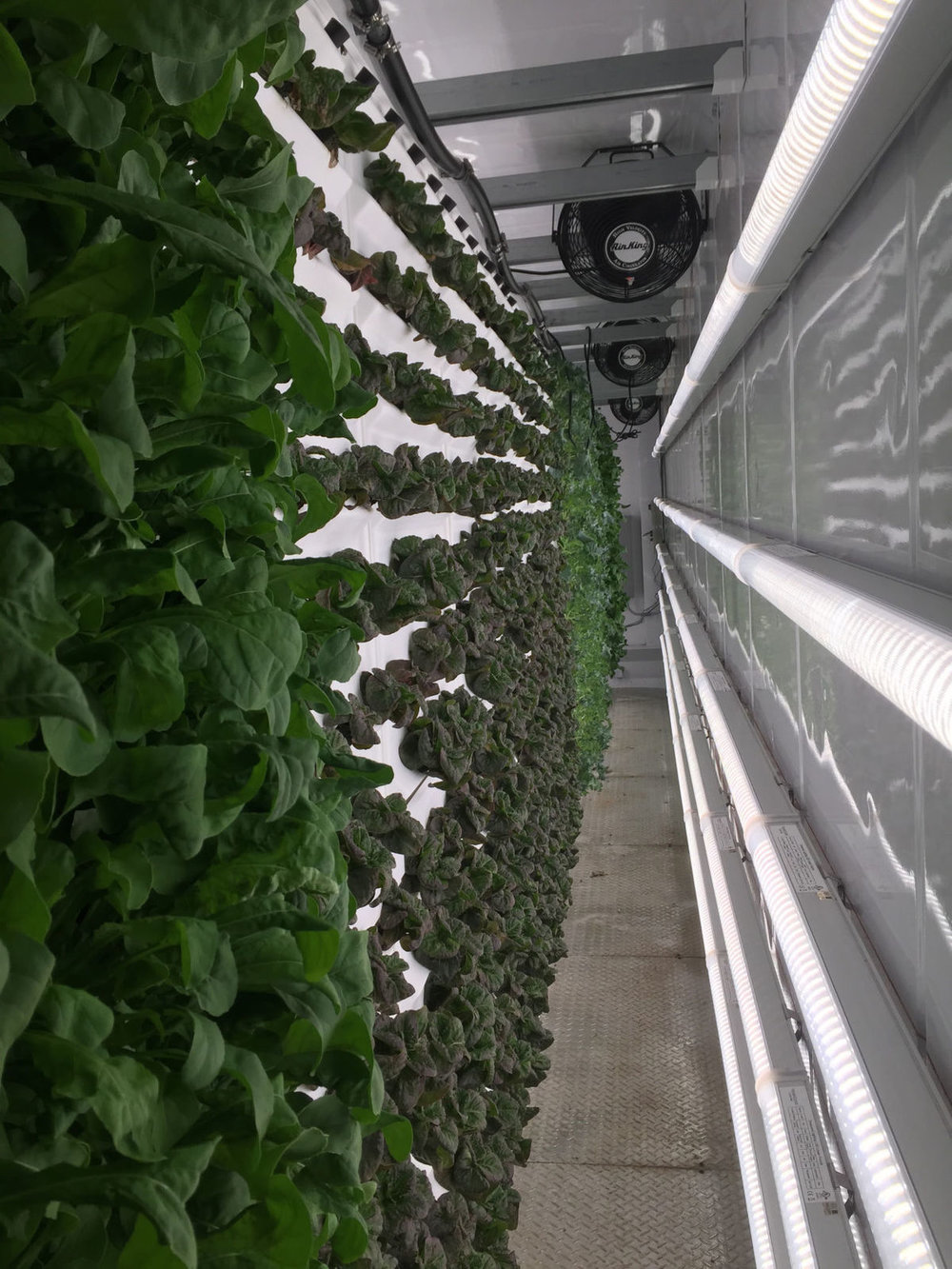 Tiger Corner Farms grows more than 40,000 heads of lettuce a year inside shipping containers in Summerville. Tony Bertauski/Provided  |  Tony Bertauski