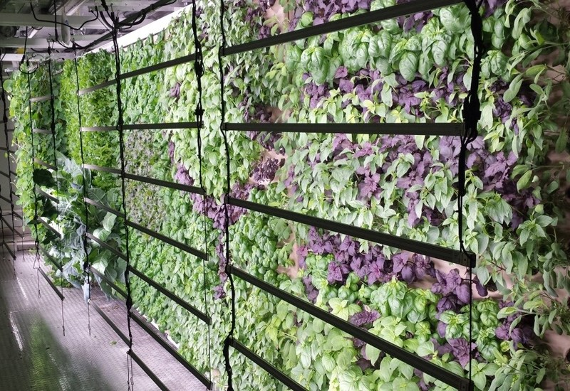Fresh Farms of America grows a wide variety of crops indoors
