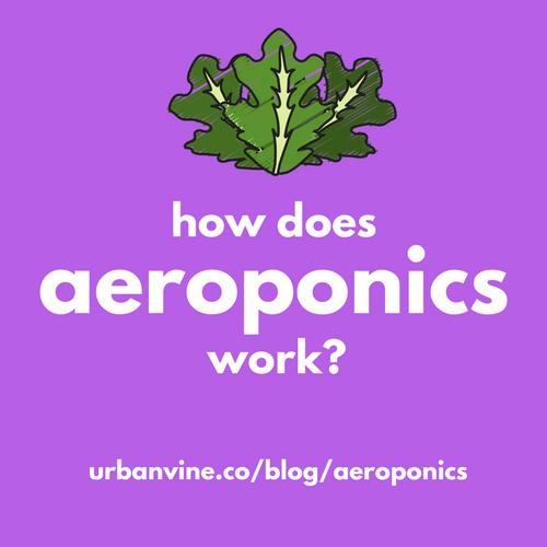 59fe2e9858ec9300013fa149_aeroponics.png