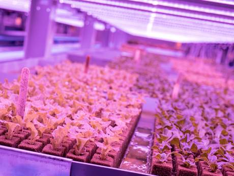 A first-of-its-kind in Dubai, this indoor farm produces leafy greens without using soil, sunlight and pesticidImage Credit: Supplied