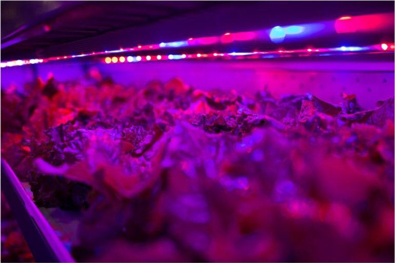 food-tank-growing-lights-1-770x513.jpg