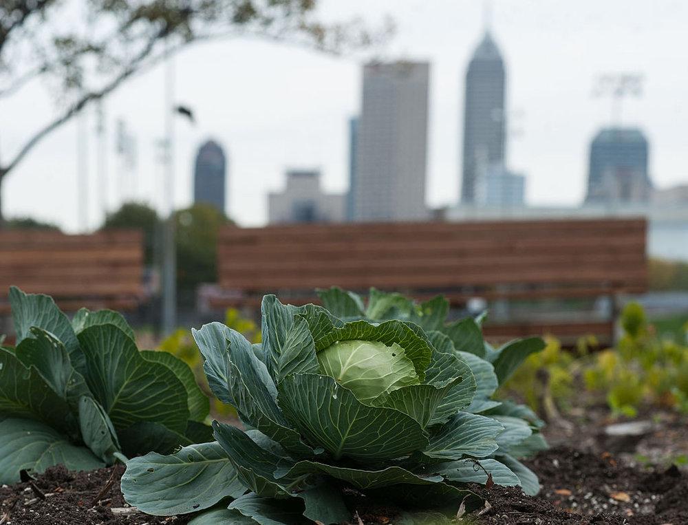The Indiana University–Purdue University Indianapolis campus garden. Photo courtesy of Wikimedia Commons