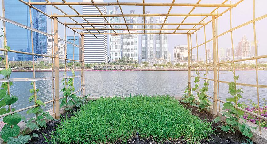 1516021178_3k4nxh_Urban-farming-shutterstock.jpg