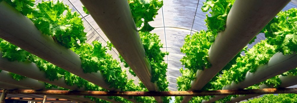 hydroponics-lead-carousel.jpg