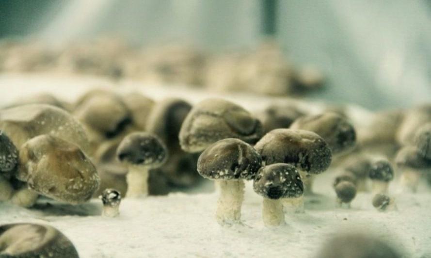 Mushrooms-La-Caverne-889x532.jpg