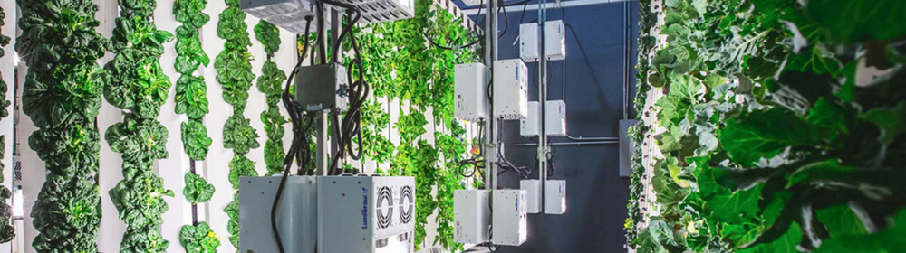 Innovative.  Exciting. Every aspect of your environment under your control.  Light and humidity, air flow, air and root temperature, nutrient delivery, pH balance and EC - with our systems every variable is under your direct control, so you can maximise growth and efficiency.  Optimise your environment for the best crop yield both in terms of quality and quantity.  Our systems let you directly manage your resources and productivity, offering 365 day availability, labour cost savings and the ease of controlling crop growth cycles.