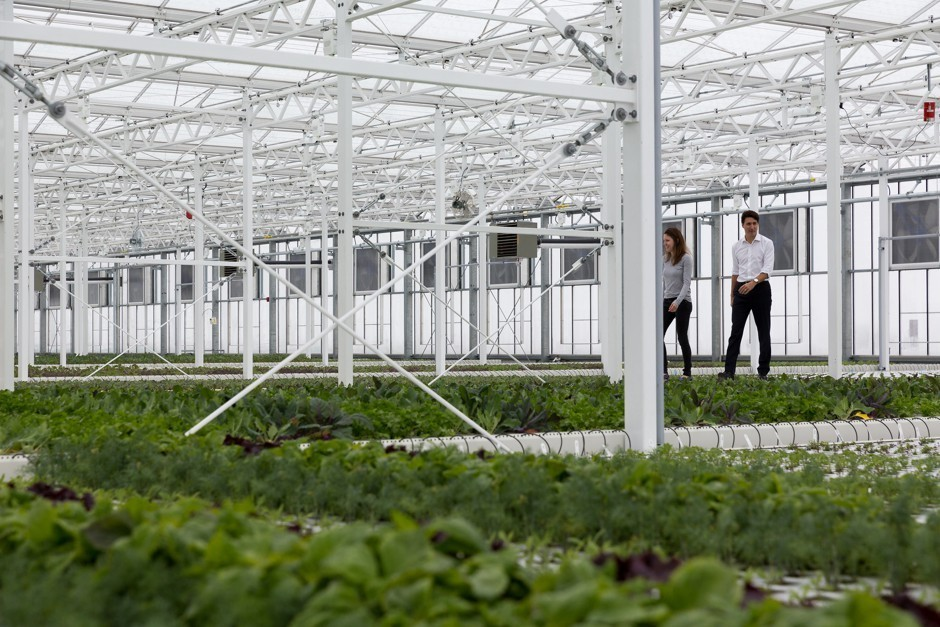 Canadian Prime Minister Justin Trudeau and Lauren Rathmell in Lufa Farms' Anjou greenhouse in March 2017 Lufa Farms
