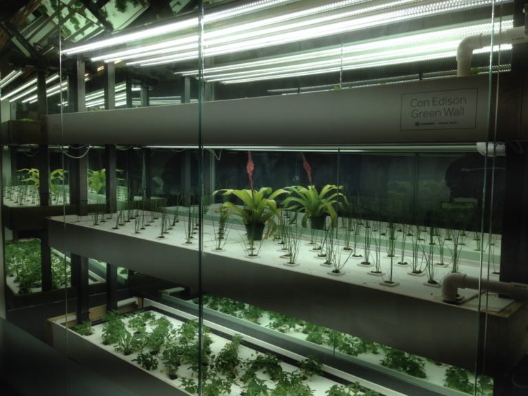 Wall showcasing hydroponic units inside of Project Farm House (Photo: Phyllis Huang for BK Reader)