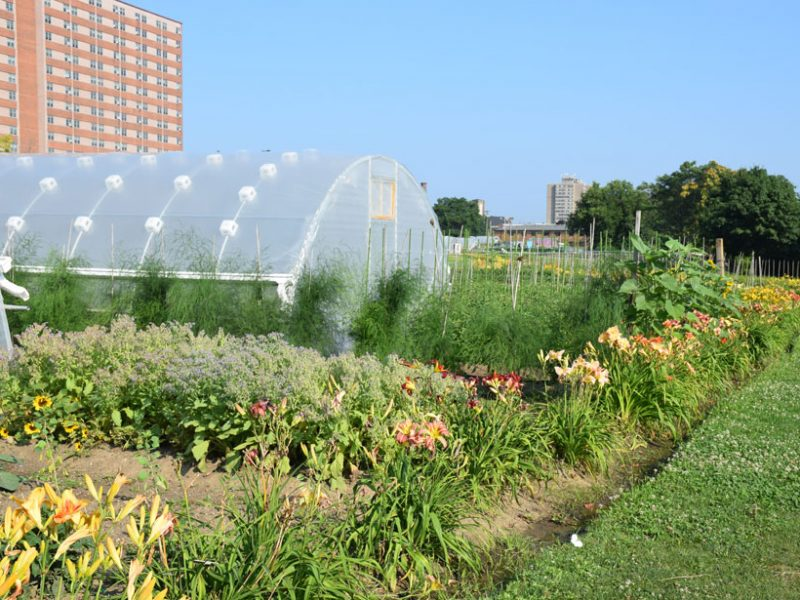 Urban agriculture in Cleveland, Ohio. Credit:  USDA