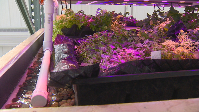 The Farmory built a soil-based aquaponics system in West De Pere High School's greenhouse. The organization held a ribbon cutting ceremony, March 8, 2018. (WLUK)