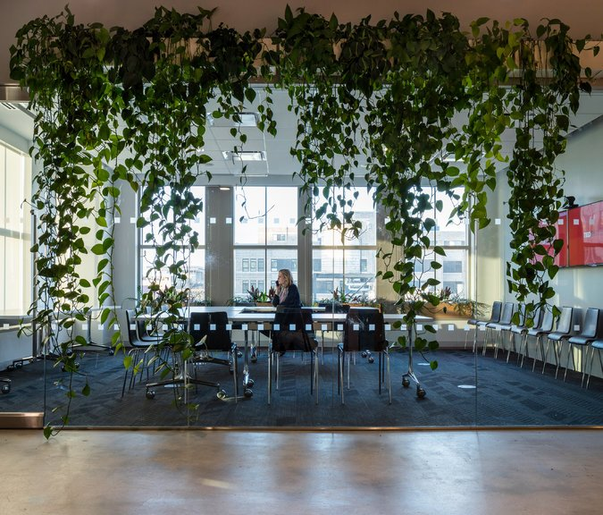 A line of cascading vines frames a conference room at the TED Talks headquarters in TriBeCa. CreditBrad Dickson for The New York Times