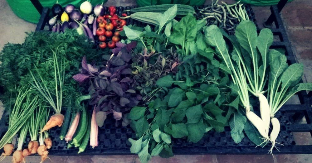 All-the-vegetables-are-grown-naturally-at-Indra-Terrace-Gardens..jpg