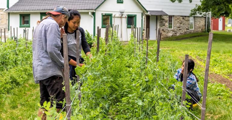 Rodale Institute  PEA-PICKING SUSTAINABILITY: ROC certification aims to generate living wages for farmers and workers.