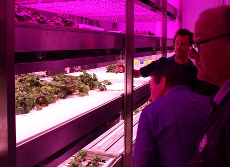 One of the climate chambers with LED lighting in the Philips GrowWise Center