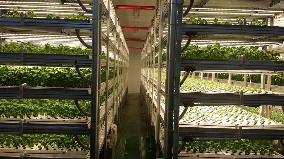 Plants grow at Miraewon's Fresh Farm III, a factory-style smart farm that grows leafy plants and herbs in an automated environment. / Courtesy of Miraewon