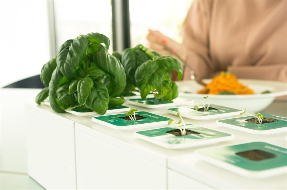 "n.thing's ""Planty Cube"" is an unmanned smart farm in a space the size of a shipping container. / Courtesy of n.thing."