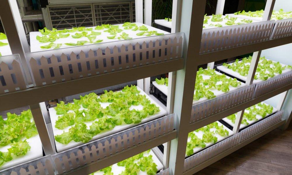 Vertical-farming-1-1020x610.jpg